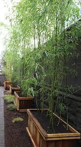 Modernize Your Garden How To Grow Bamboo The Garden Glove Backyard Landscaping Privacy Landscaping Backyard Fences
