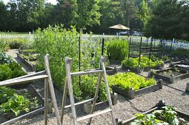 vegetable garden that will flourish