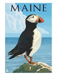 Puffin Posters Prints Paintings Wall Art For Sale Allposters Com