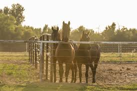 Best Horse Fencing Options Horse Rider