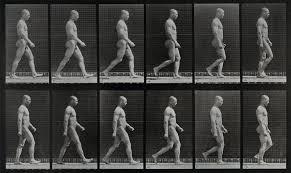 File:A man walking. Photogravure after Eadweard Muybridge, 1887. Wellcome  V0048618.jpg - Wikimedia Commons