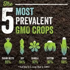 the most prevalent gmo crops gmo gmo organicfood flickr