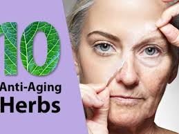 10 herbs for anti-aging and skin care – Ayurveda Tips