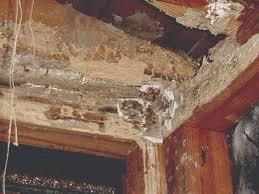 termite ceiling damage termites in