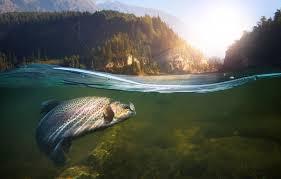 water fish fishing