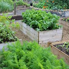 vegetable garden plans for beginners