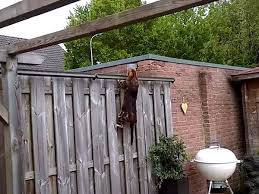 Cat Fence Nz On Twitter Visit Our Videos Page To See Some Great Footage Of Cats Trying And Failing To Get Over The Oscillot Cat Fence Oscillot Works Catsafety Https T Co Npvhmmi2dk Https T Co 5aztxvudwh