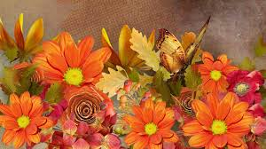autumn flowers and erfly hd