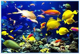 ocean scene with tropical fish c