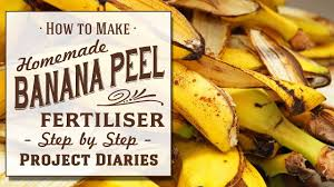 9 simple homemade plant fertilizers