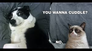 grumpy cat meme hd desktop wallpaper
