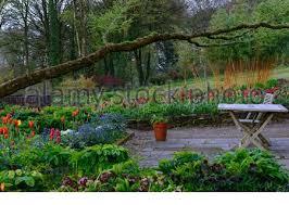 june blakes garden wicklow tulip