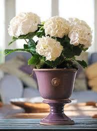 terrace and garden kew garden pots