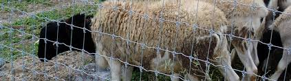 Sheep Fence High Tensile Sheep Fencing System By Stay Tuff