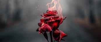 rose in fire wallpaper 2k quad hd id 4279