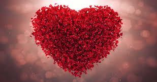 romantic red rose flower petals stock