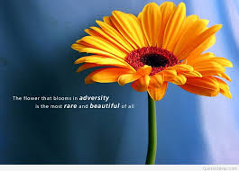 awesome inspirational quote flower brightens up