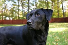 How Can I Keep My Dog Outside Without A Fence Pethelpful By Fellow Animal Lovers And Experts
