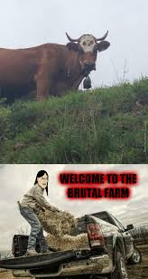 Cow Jumps 6 Ft Butcher S Fence Only To Be Fatally Shot By Cops General Discussion Know Your Meme