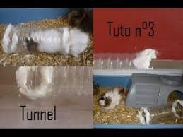 fabriquer un tunnel pour son rongeur