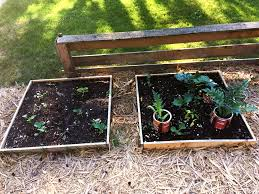 front yard raised bed vegetable garden
