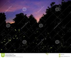 Genuine Firefly Trails In Italy 2017 Stock Photo Image Of Production Yellow 95084228