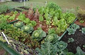 small vegetable garden ideas small