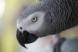 what makes parrots so intelligent
