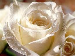 صور ورد Hd احلي الوان ورد باقات زهور جميلة سوبر كايرو