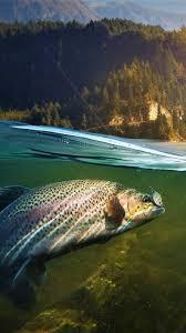 fishing wallpaper wallpaperhd wiki