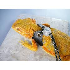size fits most bearded dragons