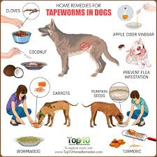 home remes for tapeworms in dogs