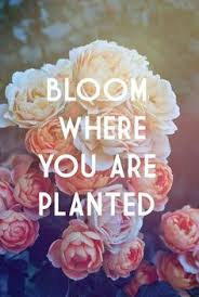 best flower quotes images quotes flower quotes words