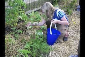 communal gardening a growing trend