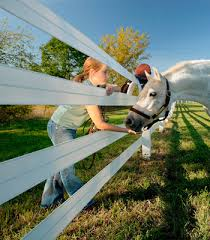 Tips For Planning Horse Fencing