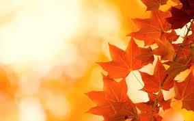 autumn leaves brightness 1680x1050
