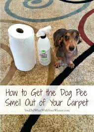 cat smell out of carpet get dog