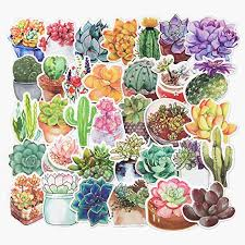 Amazon Com Jasion 70 Pcs Vinyl Stickers Lovely Watercolor Flowers Cactus And Succulent Plants Cartoon Graffiti Decals For Water Bottles Cars Motorcycle Skateboard Portable Luggages Phone Ipad Laptops Home Kitchen