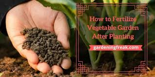 vegetable garden after planting
