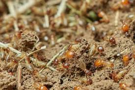 View Termites In Wood Pile  PNG