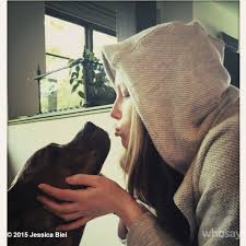 celebrities and their pets newsday