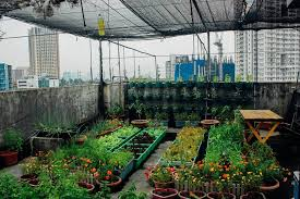 want to grow food in your home here s