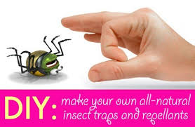 diy 5 all natural insect traps and