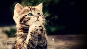 cute kittens wallpaper hd kitty cats