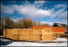 Windbreaks For Cattle