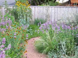 these texas native plants will make