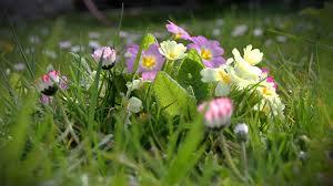 صور فصل الربيع اجمل صور للطبيعه الخضراء فى فصل النماء حبيبي