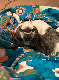 My pet Honey Badger : misleadingthumbnails