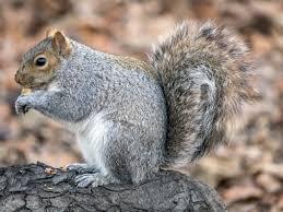 Wildlife Removal | Citrus Heights, Orangevale & Roseville, CA |