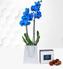 blue orchid orchid plants plant